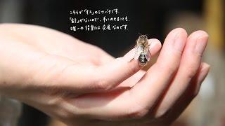 Social Innovation Academy 2017キックオフセミナー〜銀座みつばちプロジェクト〜