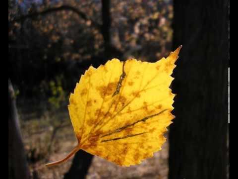 Смысловые галлюцинации - Первый День Осени