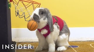 Meet The Bunny That's A Basketball Star