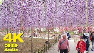 К чему снятся Пиявки видео -Асикага. Парк цветов
