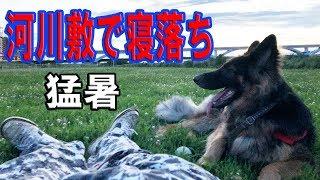 シェパード犬と河川で寝落ち、ハスキー犬との思い出映像