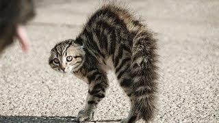 Испуганные кошки сборник 2014