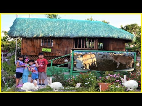 Farm Animals -  Sky's Philippine Adventure