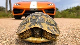 Saving A Tortoise From A Lamborghini Huracan!