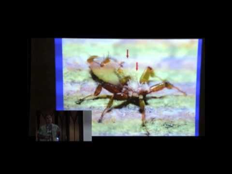 Giardia ipinadala sa ang atay