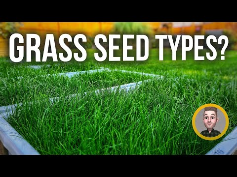 , title : 'What are the different types of Lawn Grass? - Rye, Fescue Seed Explained