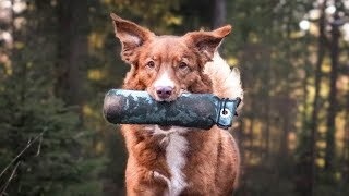 DISTANZEN vergrößern beim DUMMYTRAINING   Dummy Markierung   Hundetraining