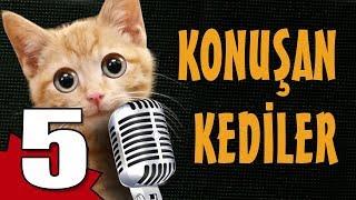Konuşan Kediler 5   En Komik Kedi Videoları