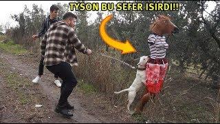 AİLEMİZİN YENİ ÜYESİ TANKER NEJLA TYSON VE MARLANIN SALDIRISINA UĞRADI!!