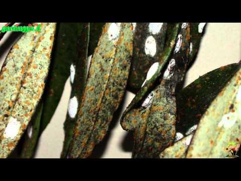 Come rapidamente lavorerà pyranbodies in vermi