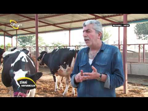 Zirai Hayvancılık-Süt Sığırı Yetiştiriciliği