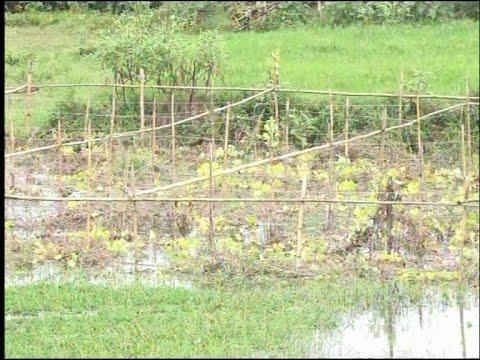 নরসিংদীতে টানা বৃষ্টিতে নষ্ট হয়ে গেছে সবজি বাগান | ETV News