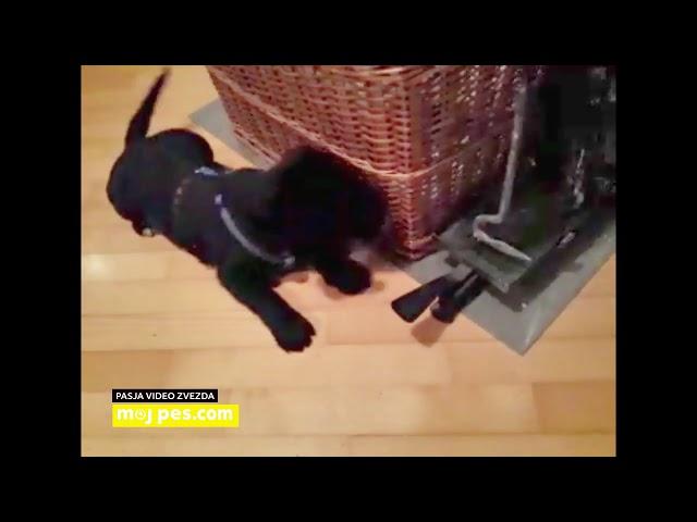 Riki – Video natečaj 2020 – Revija Moj Pes #Riki #MojPes