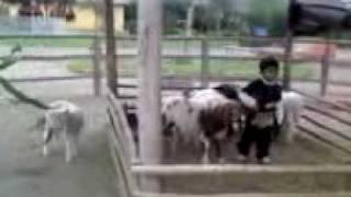 preview picture of video 'YURIAVISOS - LA GRANJITA PACHACAMAC - PAOLO DENTRO DEL CORRAL'
