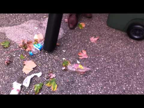 Yaprakmatik Yaprak ve çöp Toplama makinası