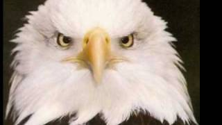 "The Eagle ""Symbol of American Freedom"""