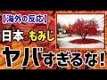 【海外の反応】衝撃!!日本のもみじ「これはヤバすぎるな!」外国人が庭に植えた日本のもみじが、秋になってとんでもないことになっていたぞ!