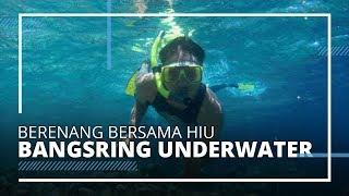 Bangsring Underwater Tawarkan Keindahan Laut Banyuwangi, Bisa Melihat Ikan Hiu hingga Snorkeling