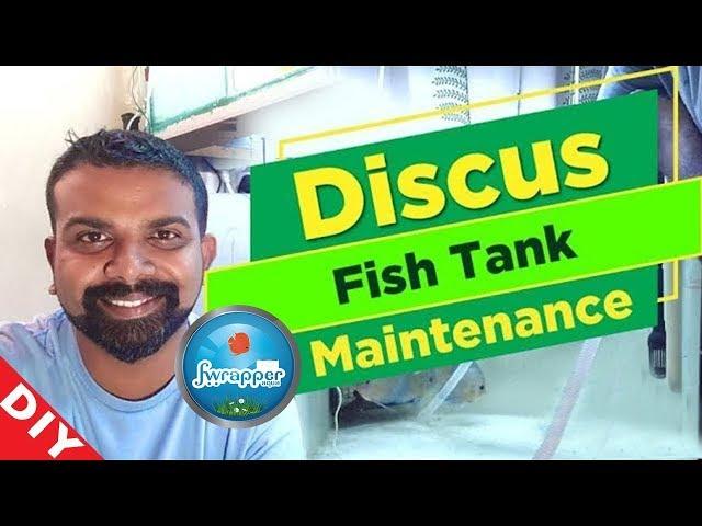 Discus Fish Tank Maintenance || Aquarium Maintenance || Fish Tank Cleaning || Water Change