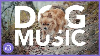 Dog Music: 11 Hours of Relaxing Dog Sleep Music (2020)