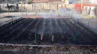 Texas Organic Spring 2012 Vegetable Garden: Part 1 of 8