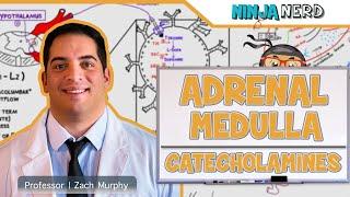 Endocrinology | Adrenal Gland: Adrenal Medulla | Part 4