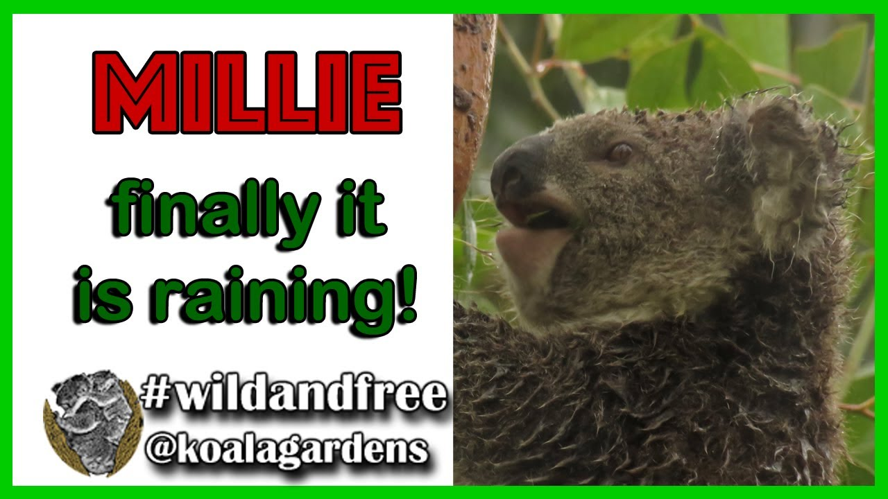 Millie – finally we have some rain!