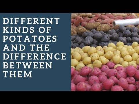 , title : 'Different kinds of potatoes and the difference between them