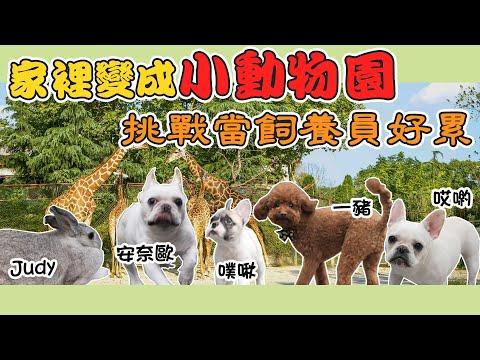 嘗試自己一個人照顧五隻動物一天