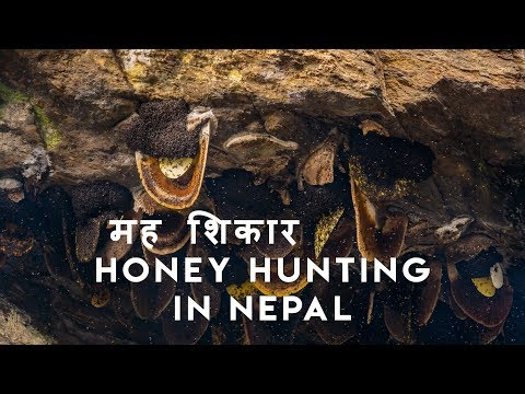 Mad Honey Hunters Of Himalayas (2018) - In Nepal there lives a tribe who go for hunting psychedelic honey in the high cliffs of Himalayas.