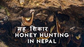 Mad Honey Hunters Of Himalayas | Scaring Documentary |