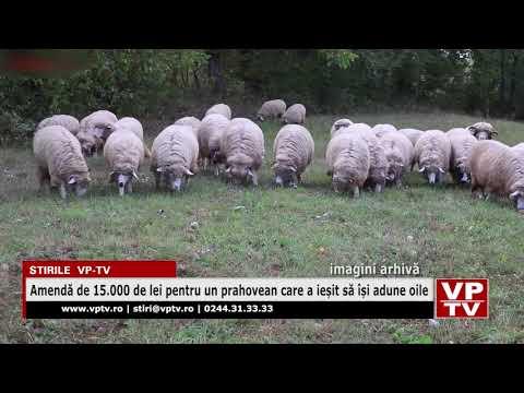 Amendă de 15.000 de lei pentru un prahovean care a ieșit să își adune oile