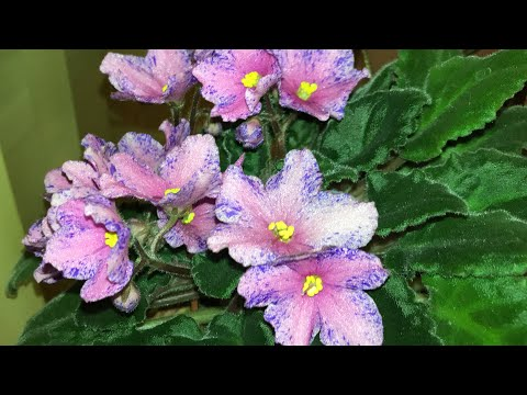 Комнатные цветы в Апреле 🌸