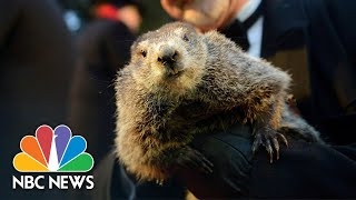 Watch Live: Punxsutawney Phil gives his Groundhog Day prediction