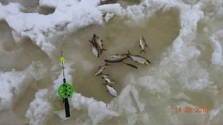 Рыбалка на десногорском водохранилище д богданово 2019г