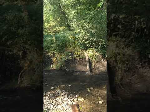 Video Of Yellow River State Forest, IA