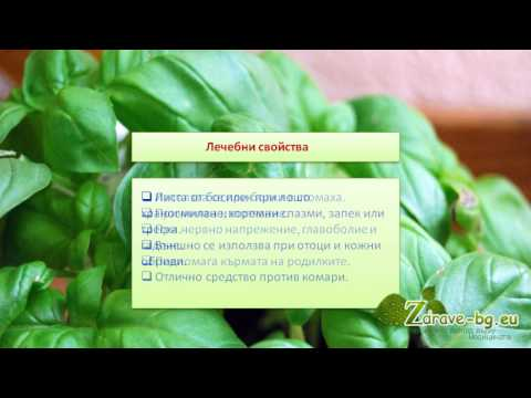 Видео: босилек (билка) – лечебно действие, чай и кулинарни свойства