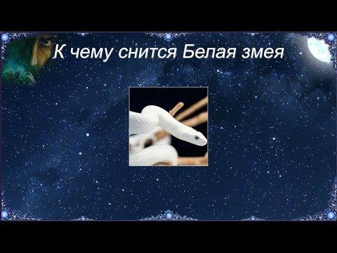 К чему снится Белая змея (Сонник)