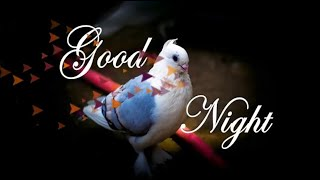 Good Night WhatsApp Status, Messages, Quotes, Images, SMS, Wishes, Video #GoodNight Night Messages