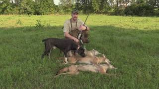 COYOTE HUNTING-- POWER OF THE DOGS!!  TRIPLE KILLED!!