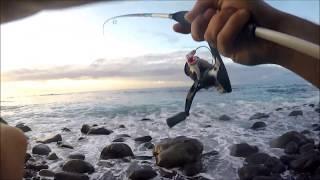Sargos Rockfishing Canarias