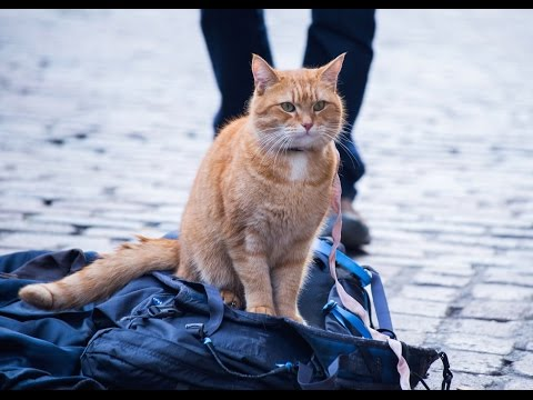 New Official Trailer for A Street Cat Named Bob