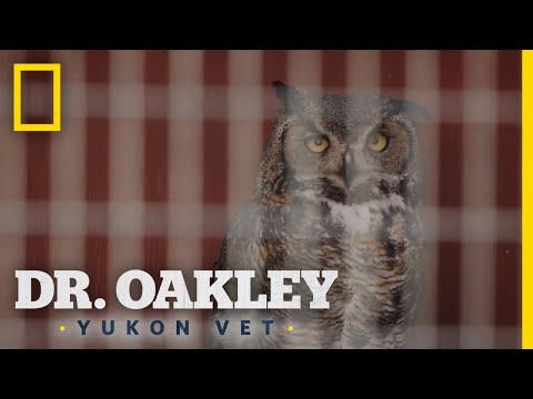 Snappy the Owl | Dr. Oakley, Yukon Vet