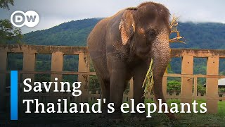Thailand: The elephant rescuer of Chiang Mai   Global Ideas