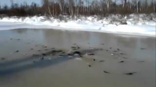 Рыба выпрыгивает зимняя рыбалка