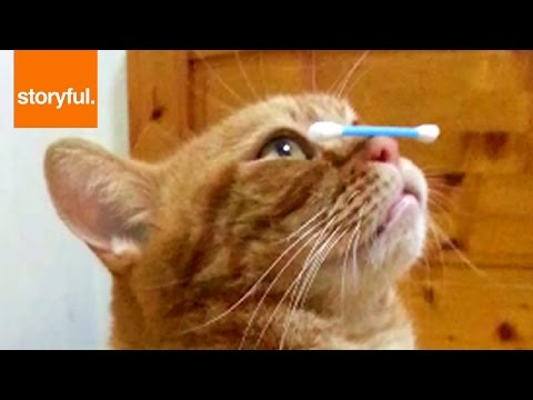 Kitty Perfectly Balances Q-Tip On Nose (Storyful, Cats)