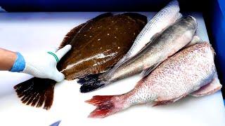 사시미 회뜨기 FISH CUTTING SASHIMI SEAFOOD  - Korean food