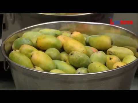 Leenova Mango Juice(Pulp) Processing Machine
