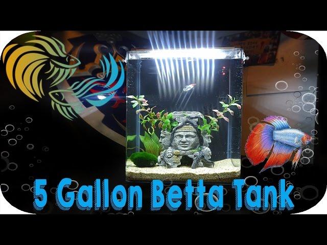 5 GALLON BETTA FISH TANK SET UP