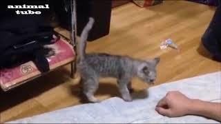 Dogs  Cats イヌ ネコ compilation